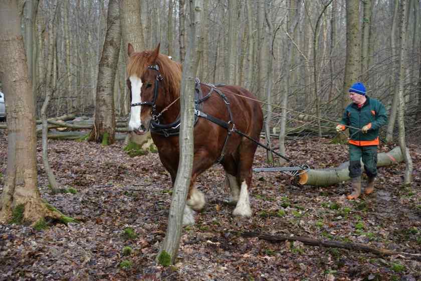 horse work2