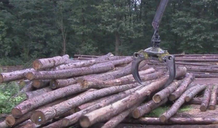 lubeck logs