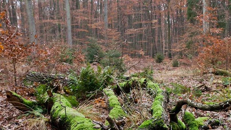 luebeck-wald-stadtwald-gp04ese